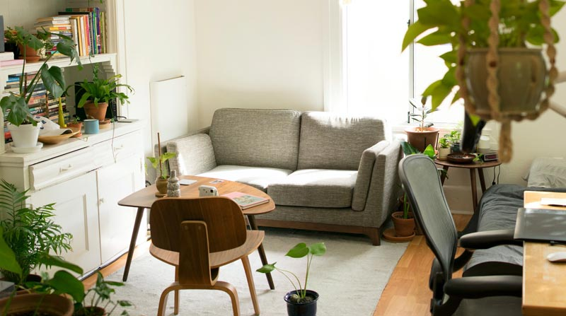 Clean living area with plants